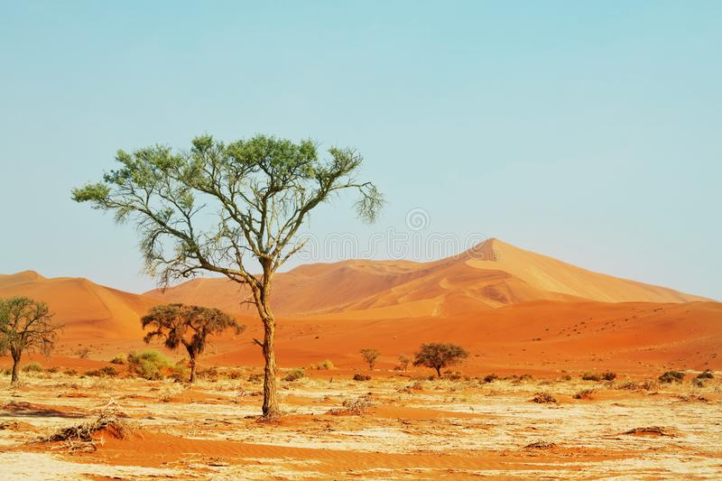 Namib stock photos
