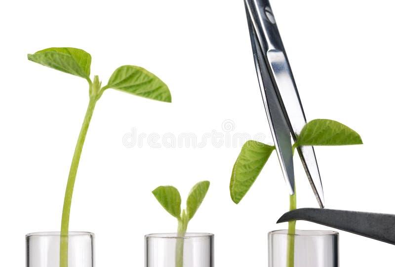 Experiência com plantas pequenas imagem de stock royalty free
