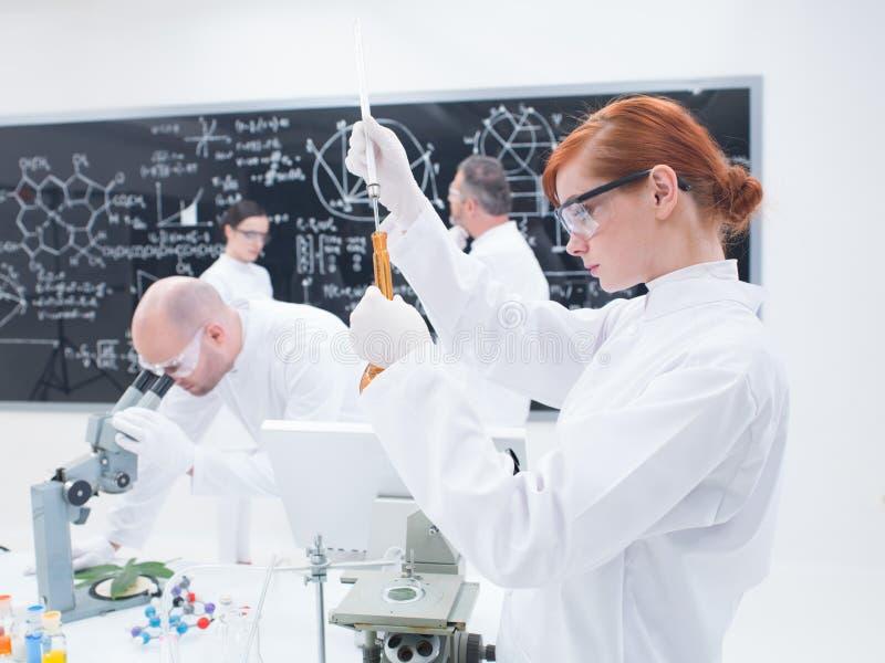 Experiências do laboratório dos cientistas imagem de stock royalty free