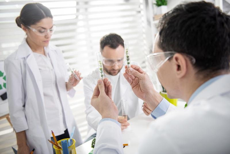 Experienced ecologists conducting new experiments. Our test tubes. Serious professional experienced ecologists working on a project and wearing a uniform and royalty free stock photos