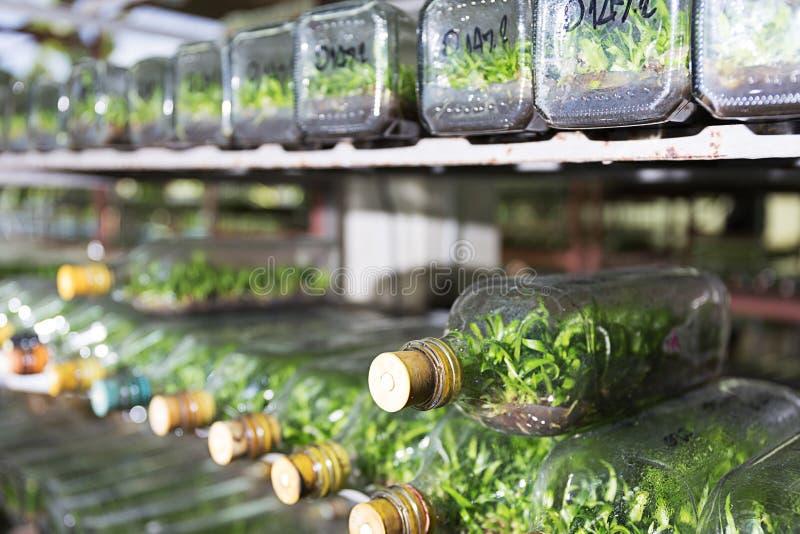 experiment av cellen för växt för kultur för växtsilkespapper i teknologin royaltyfria foton