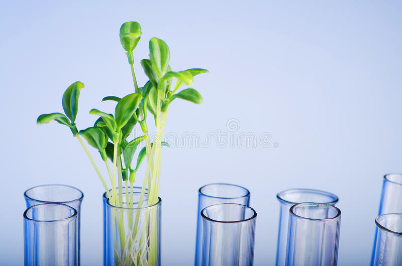 Download Experiment With Green Seedling Stock Photo - Image: 23604938
