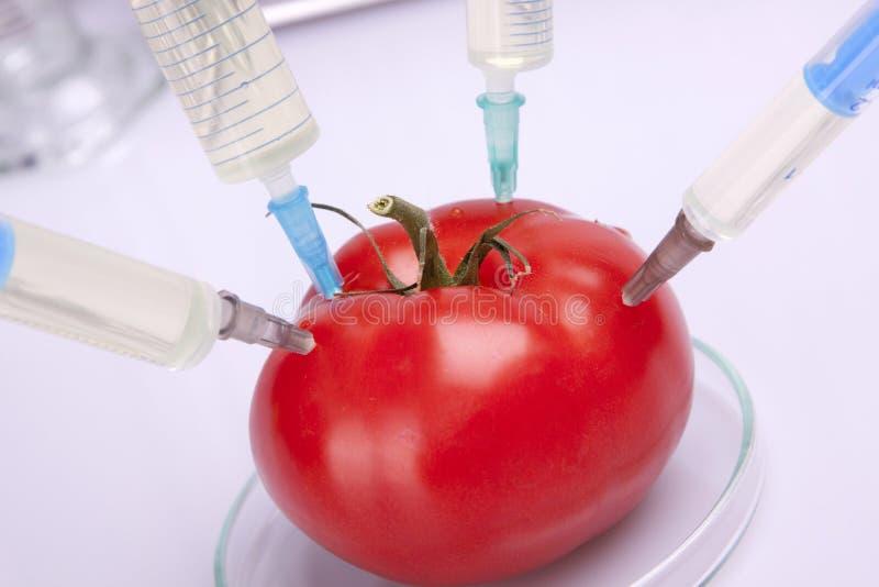 Experimentação com o tomate vermelho fotografia de stock
