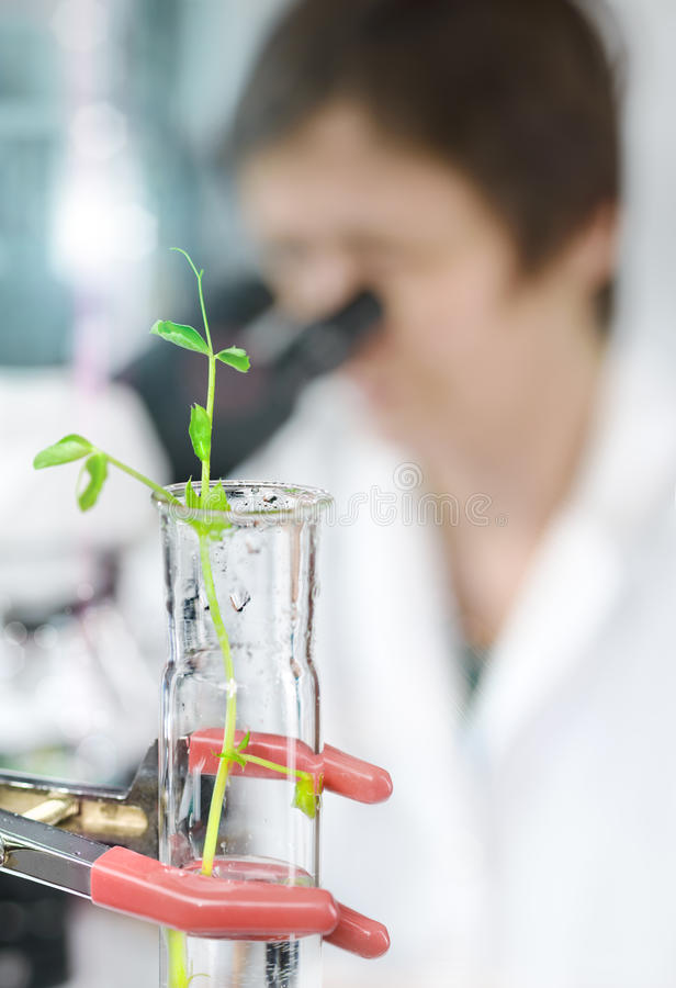 Experimental plant in a glass tube with a microscopist in lab co stock images