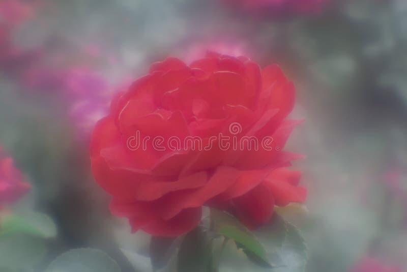 Experimentellt foto på den ändrade linsmonokeln från den manuella linsen av helios-44, redflower royaltyfri bild