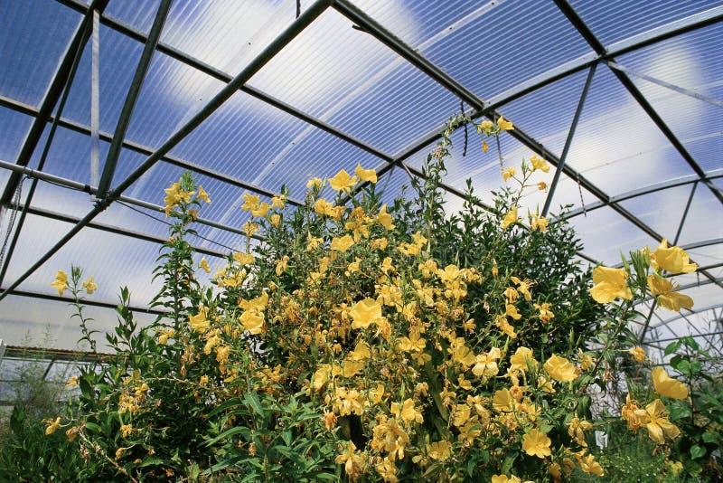 Experimentellt växthus royaltyfri bild
