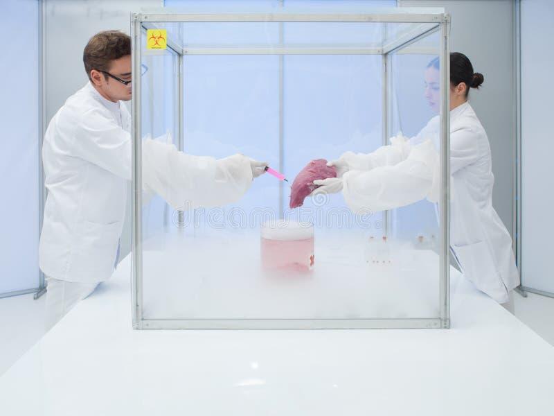 Experimentieren mit flüssigem Stickstoff im Labor stockbild