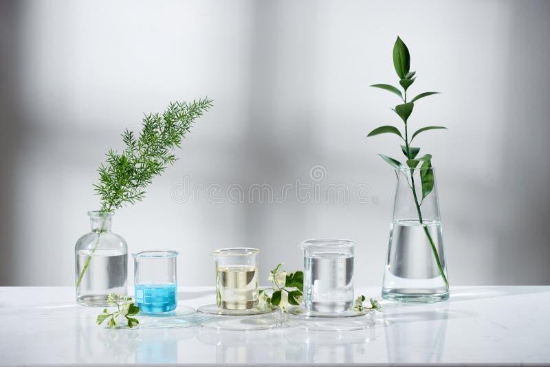 experimento e investigaci?n del laboratorio con la hoja, imagen de archivo