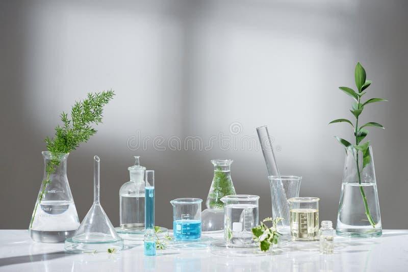 Experimento e investigaci?n del laboratorio con el extracto de la hoja, del aceite y del ingrediente para la belleza natural y el imagen de archivo libre de regalías