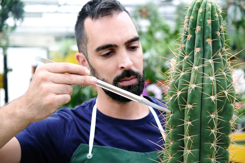 Expert Man At Work In Greenhouse With Cactus royalty free stock photos