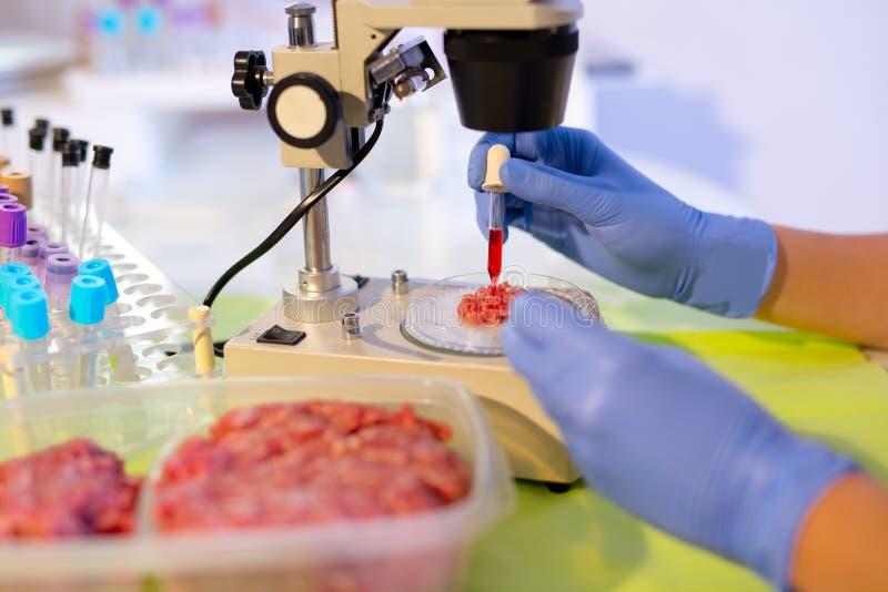 Experto del control de calidad de la comida que examina en la carne imagen de archivo