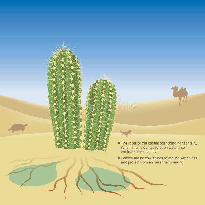 Explain illustrate of the cactus. Explain illustrate of the cactus live in desert a very hot and dry climate. 3D Illustration vector illustration