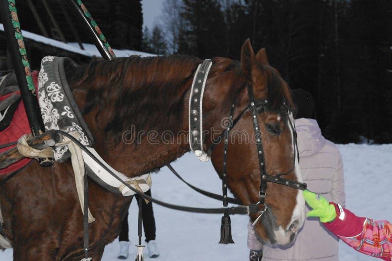 exploaterad häst fotografering för bildbyråer