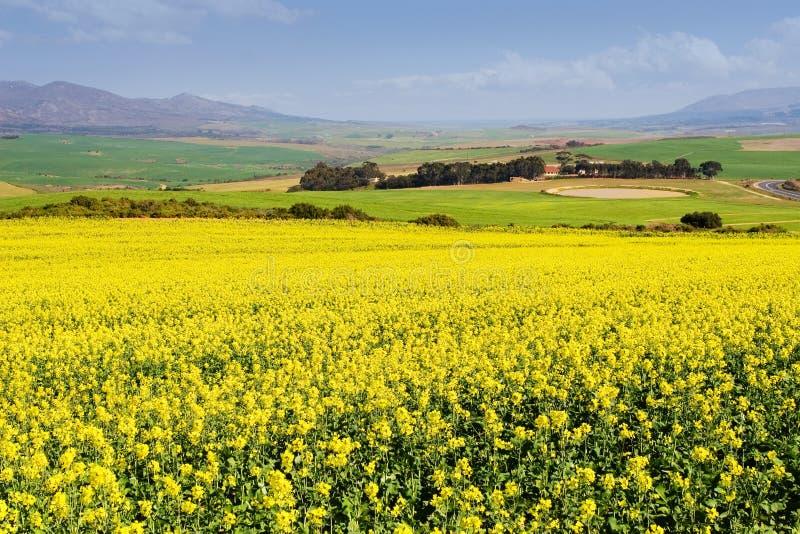 Exploração agrícola #2 fotos de stock