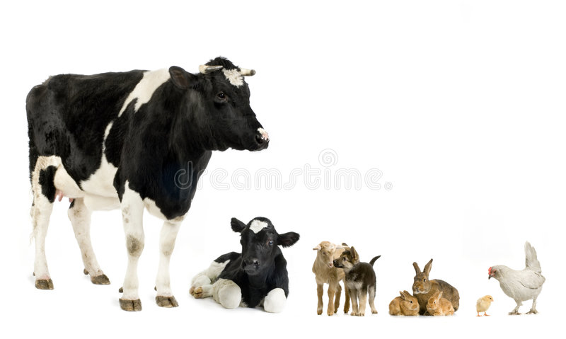 Exploração agrícola fotografia de stock