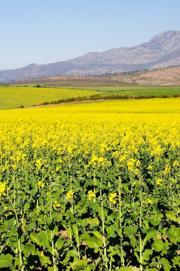 Exploração agrícola #4 foto de stock royalty free