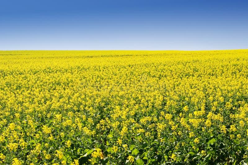 Exploração agrícola #5 imagens de stock royalty free