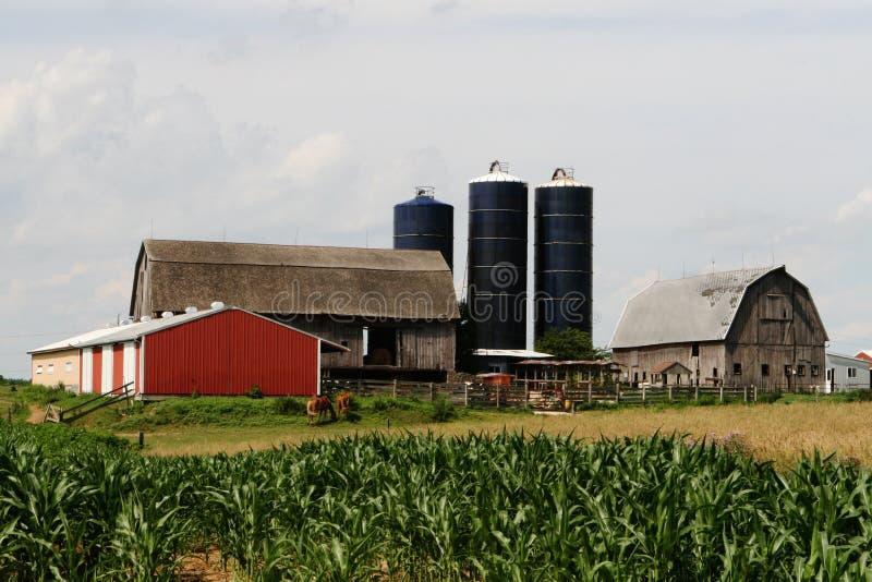 Exploração agrícola americana quintessencial foto de stock