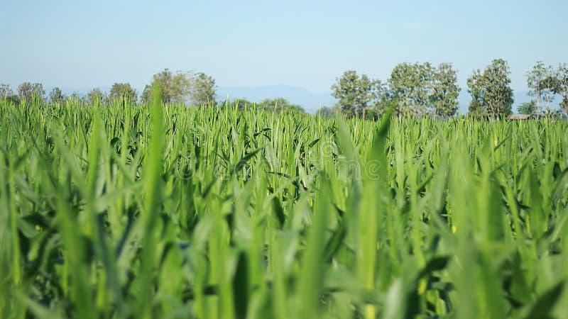 Exploração agrícola, crescimento, campo, ambiente, bonito, exterior, natural, planta, verde, natureza imagens de stock