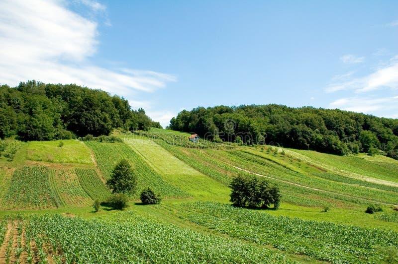 Exploração agrícola croata 1