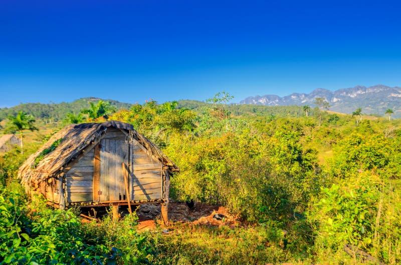 Exploração agrícola cubana abandonada rural do cigarro fotos de stock royalty free