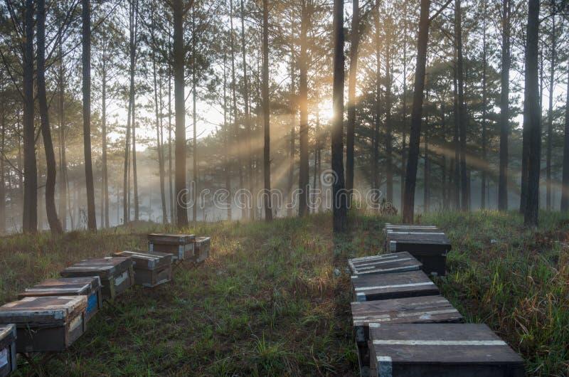 A exploração agrícola da abelha, apicultor, natureza a favor do meio ambiente Foto tomada no nascer do sol com melhores raios de  imagem de stock royalty free