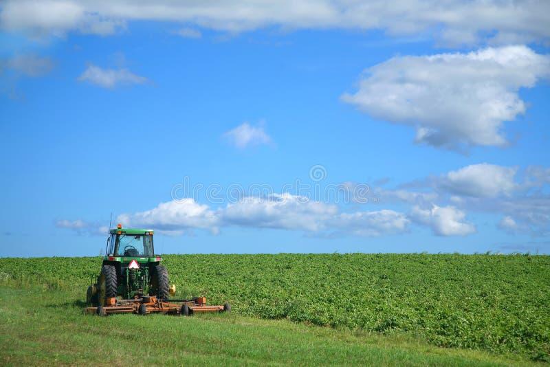 Exploração agrícola da batata imagem de stock royalty free