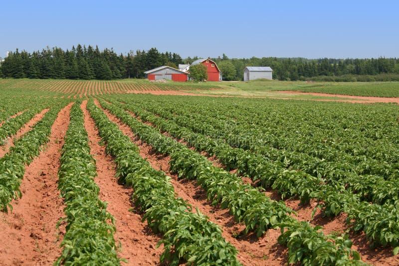 Exploração agrícola da batata de Prince Edward Island fotos de stock