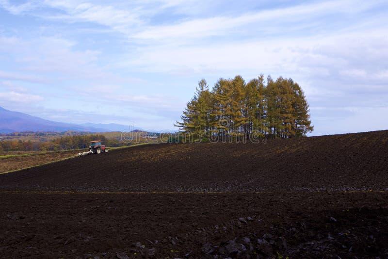 Exploração agrícola da couve em um outono atrasado imagem de stock royalty free