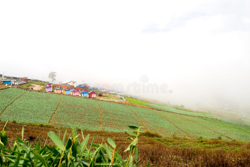 Exploração agrícola da couve na montanha Phu Thap Boek fotos de stock