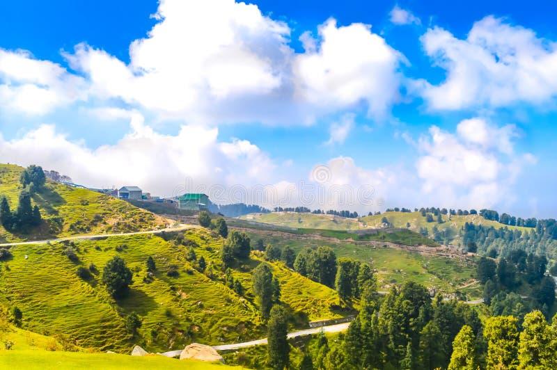 A exploração agrícola da etapa que cresce o trigo verde bonito disparou contra um céu azul e umas nuvens brancas em india norte S fotografia de stock