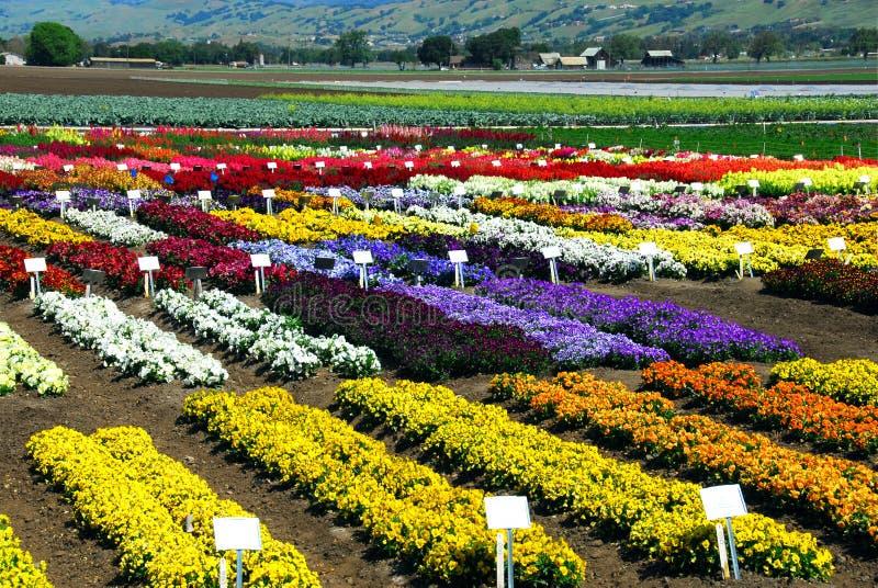 Exploração agrícola da flor imagens de stock