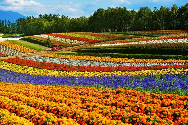 Exploração agrícola da flor do arco-íris foto de stock