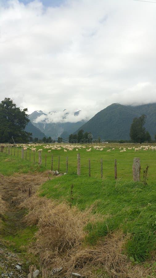 Exploração agrícola da geleira do Fox foto de stock royalty free