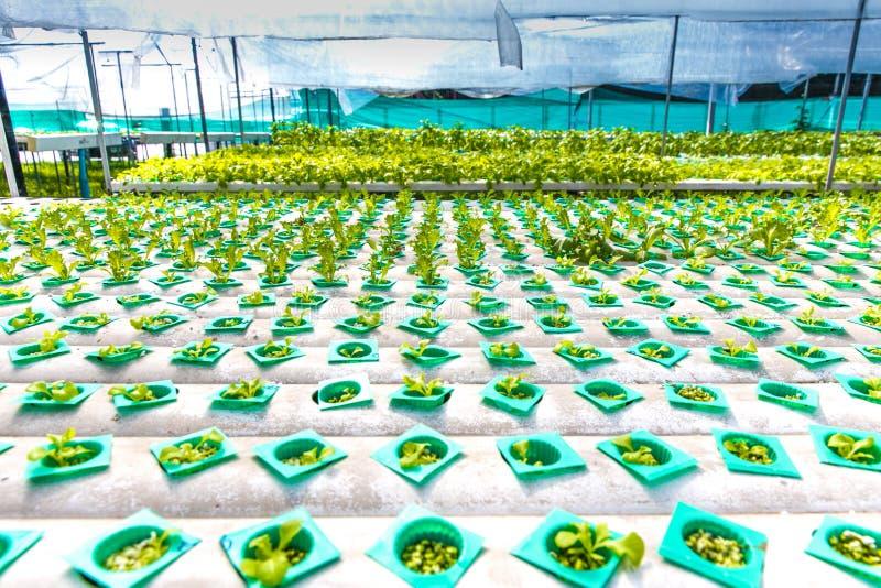 Exploração agrícola da hidroponia imagens de stock