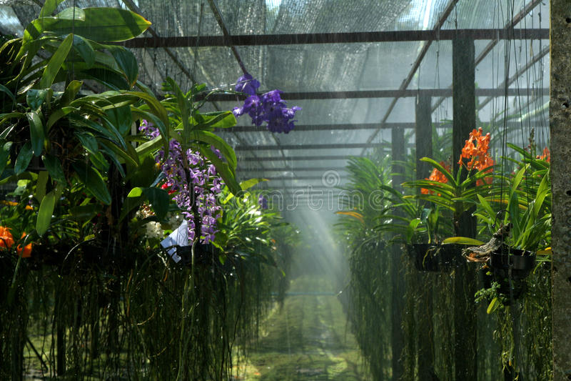 Exploração agrícola da orquídea fotos de stock royalty free
