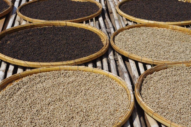 Exploração agrícola da pimenta fotografia de stock
