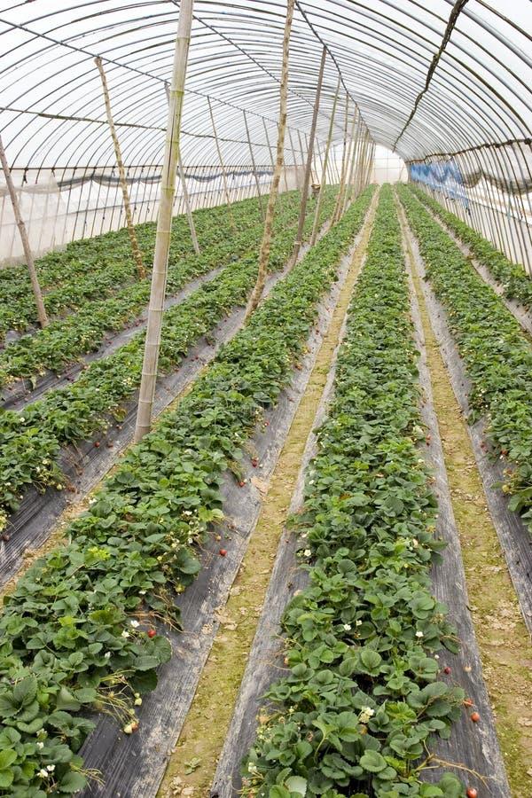 Exploração agrícola da vertente da agricultura imagens de stock royalty free
