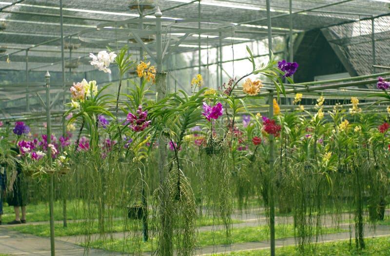 Exploração agrícola das orquídeas foto de stock royalty free