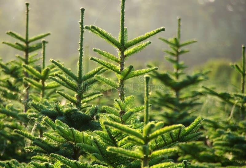 Exploração agrícola de árvore imagens de stock royalty free