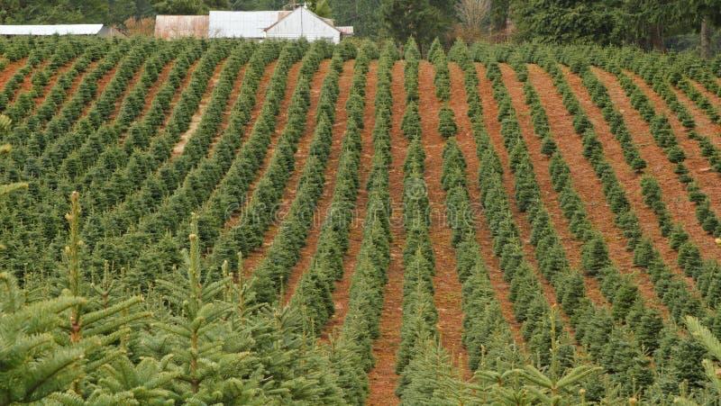 Exploração agrícola de árvore foto de stock royalty free