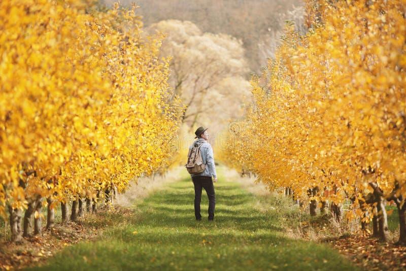 Exploração agrícola de árvore de Apple imagens de stock royalty free
