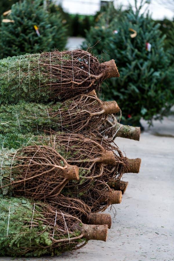 Exploração agrícola de árvore do Natal fotografia de stock