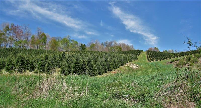 Exploração agrícola de árvore do Natal ao longo de Virginia Creeper Trail imagens de stock