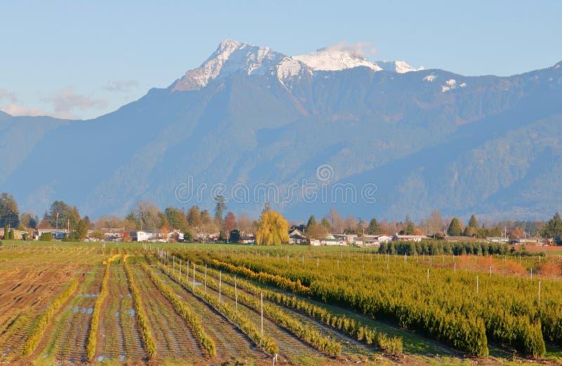 Exploração agrícola de árvore no Columbia Britânica do sudoeste, Canadá fotos de stock royalty free