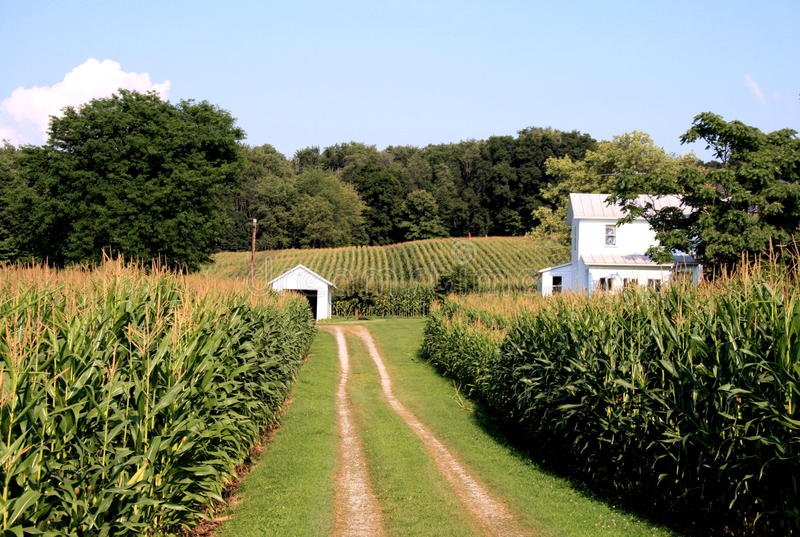 Exploração agrícola de Amish foto de stock royalty free