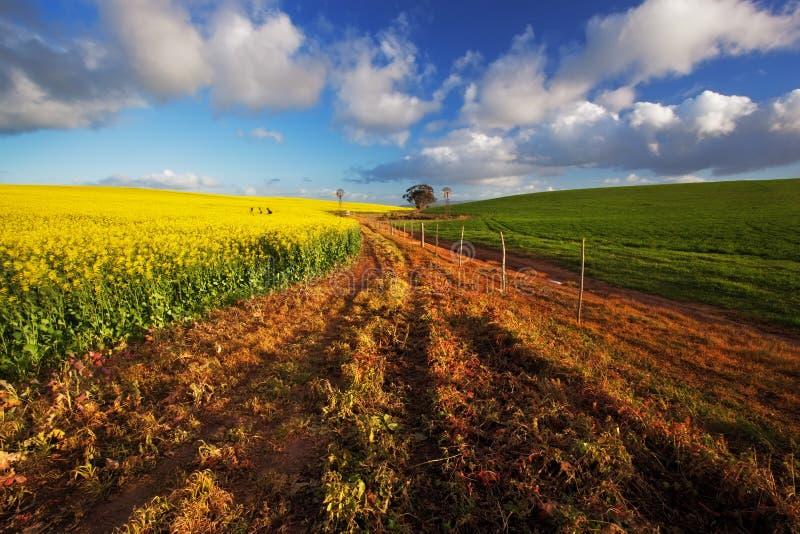 Exploração agrícola de Canola imagens de stock royalty free