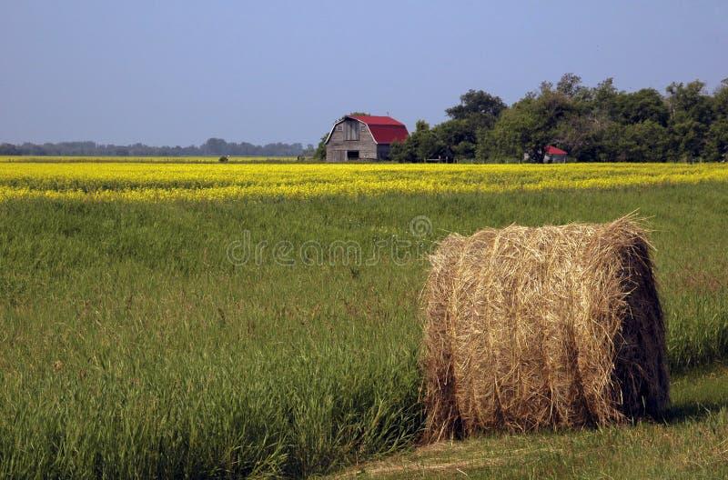 Exploração agrícola de Canola fotos de stock
