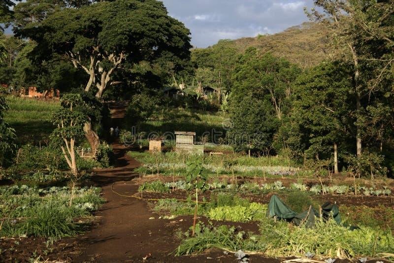 A exploração agrícola de Gibb, foto de stock