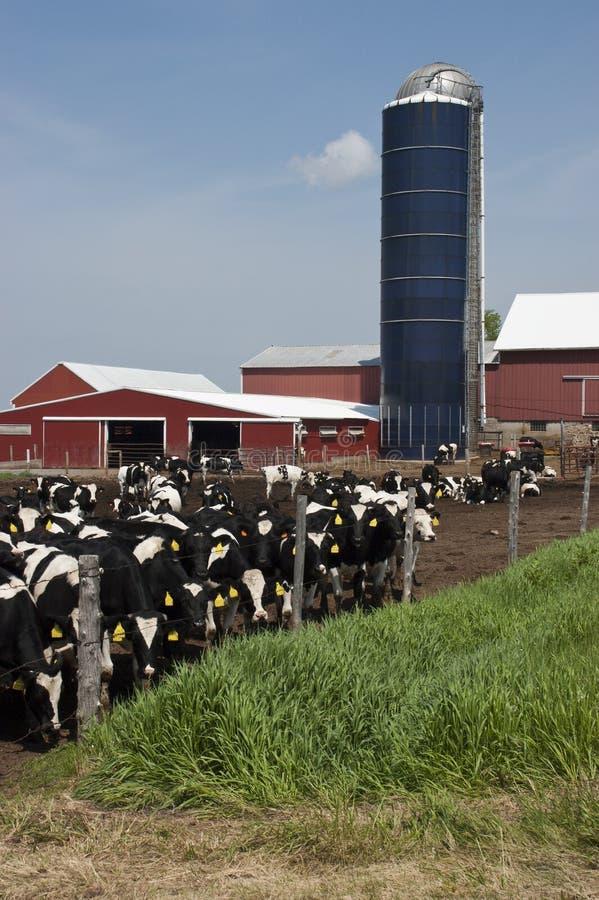 Exploração agrícola de leiteria de Wisconsin e vacas de leite modernas imagem de stock royalty free